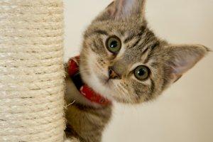 adorable kitten onstartups